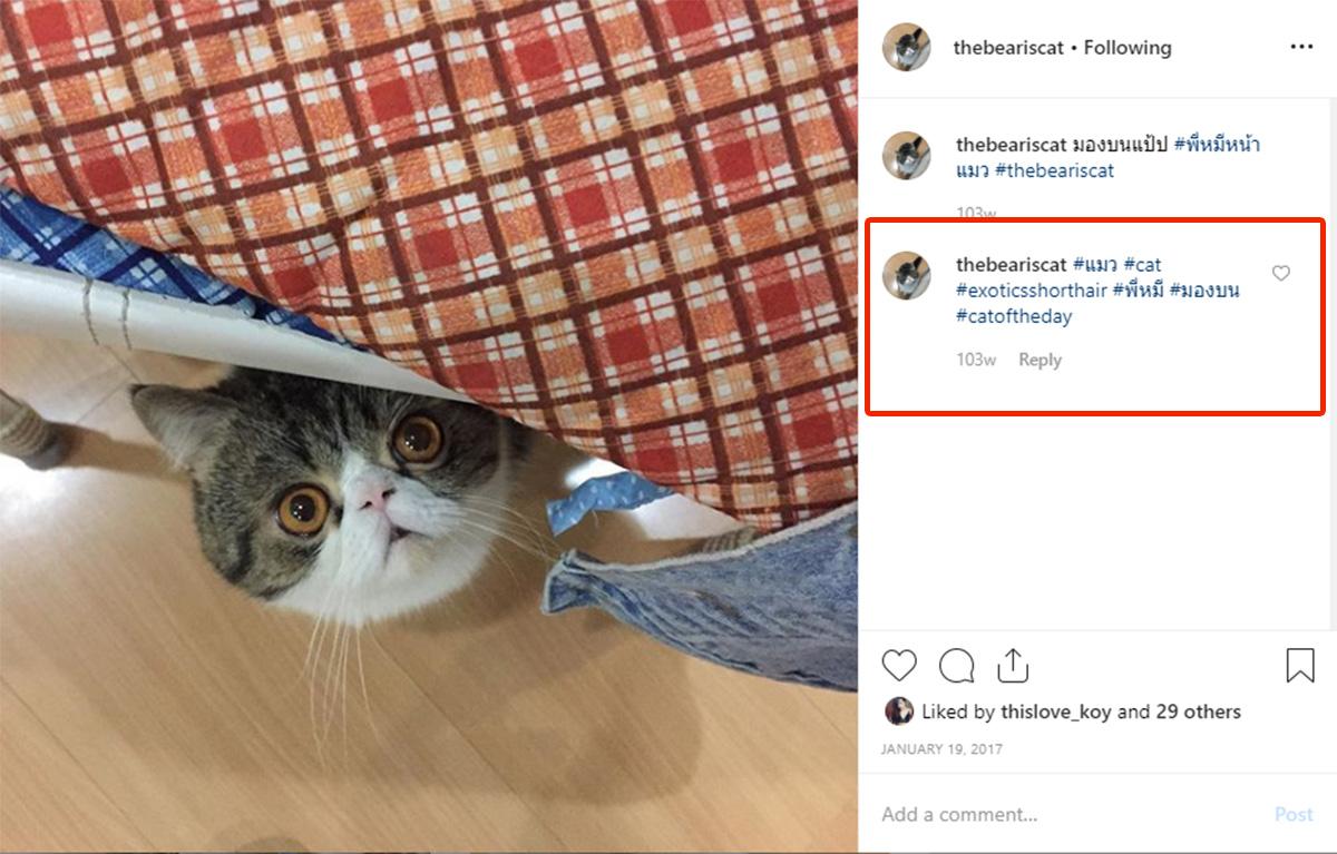 ตัวอย่าง Instagram Hashtag